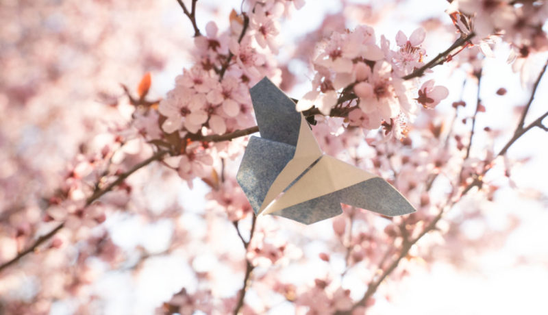 Spring2020-c-lisalux